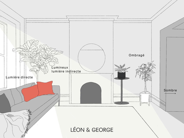 Le guide de luminosité pour les plantespar Léon & George.