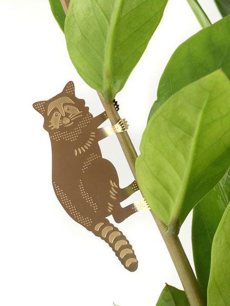 Plant Animal Raton laveur
