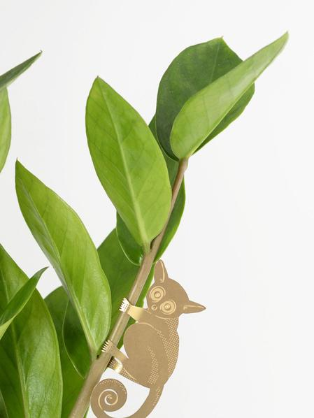Plant Animal - Bush Baby