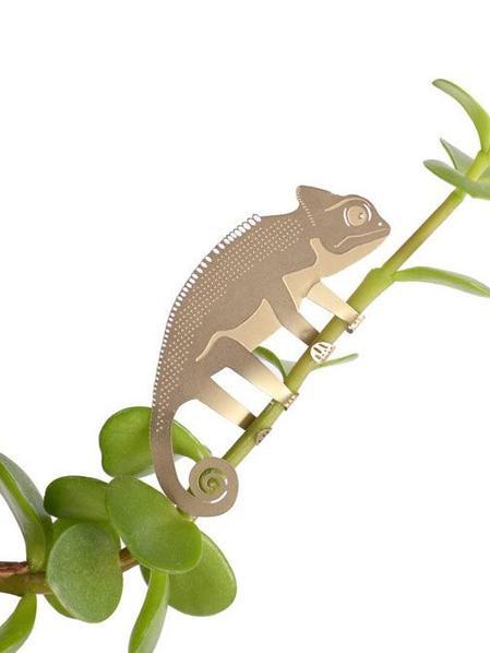 Plant Animal Caméléon