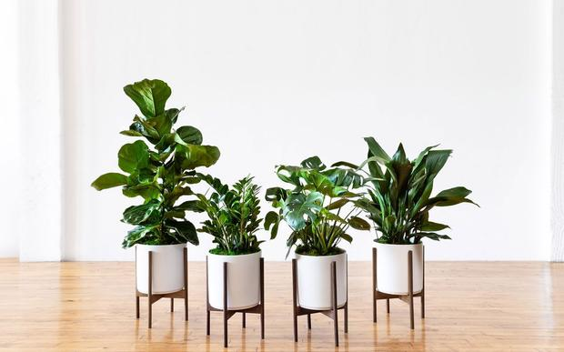 Premium Plants Sets You're Guaranteed to Love