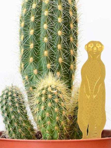 Plant Animal Suricate