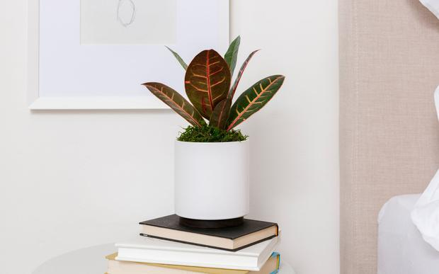 Unique and colorful plants for fall.