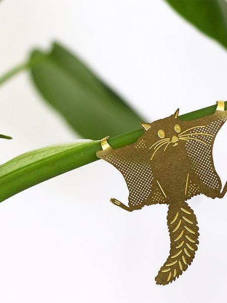 Plant Animal Ecureuil volant