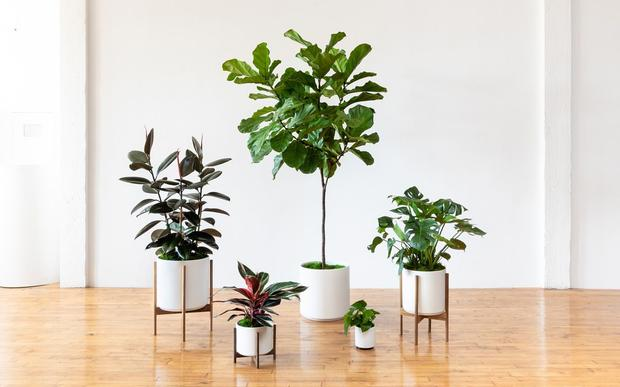 Our full collection of hand-picked premium greenery & ceramic planters.